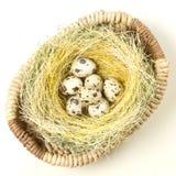 Wielkanocni przepiórek jajka w gniazdeczku Obrazy Royalty Free