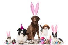 Wielkanocni zwierzęta domowe Zdjęcia Royalty Free