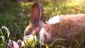 Wielkanocny biały królik z Easter jajkami siedzi w trawie zbiory wideo