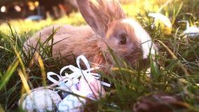 Wielkanocny biały królik z Easter jajkami siedzi w trawie zdjęcie wideo