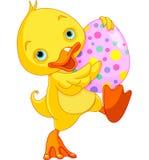 Wielkanocny kaczątko Niesie jajko Fotografia Stock