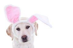 Wielkanocny królik Obrazy Stock