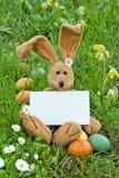 Wielkanocny królik zdjęcia stock