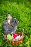 Wielkanocny królik i Easter jajka Obrazy Royalty Free