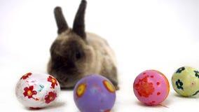 Wielkanocny królik z colourful jajkami zbiory