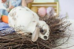 Wielkanocny królik z Easter jajkami i gniazdeczkiem Zdjęcie Royalty Free