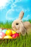 Wielkanocny królik z jajkami Zdjęcia Royalty Free