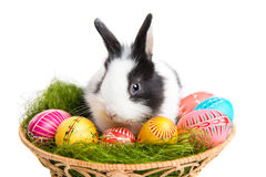 Wielkanocny królik z jajkami w koszu Zdjęcie Stock