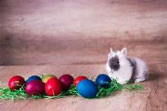 Wielkanocny królik z malujący jajka Fotografia Royalty Free