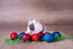 Wielkanocny królik z malujący jajka na drewnianym tle Obrazy Royalty Free