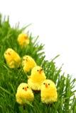 Wielkanocny kurczak Zdjęcia Stock