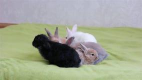 Wielkanocny symbol, śliczni colourful zwierzęta zabawę, króliki czołgać się na zielonej podłoga, śmieszni króliki zbiory