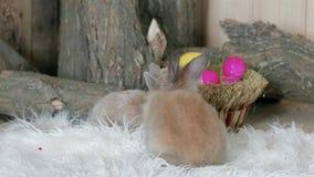 Wielkanocny symbol, mali śliczni kolorowi zwierzęta zabawę, króliki czołgać się na białej podłoga zbiory