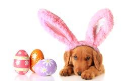Wielkanocny szczeniak Zdjęcie Stock