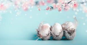 Wielkanocny tło w pastelowym kolorze Skrzynka z Wielkanocnymi jajkami przy błękitem z bokeh i wiszącym wiosny okwitnięciem rozgał obraz royalty free