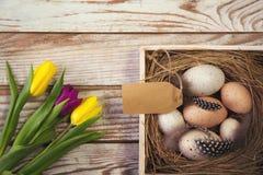 Wielkanocny tło z jajkami w gniazdeczku i tulipanach purpurowych i żółtych Zdjęcie Royalty Free