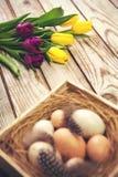 Wielkanocny tło z jajkami w gniazdeczku i tulipanach purpurowych i żółtych Obraz Royalty Free