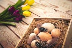 Wielkanocny tło z jajkami w gniazdeczku i tulipanach purpurowych i żółtych Obraz Stock