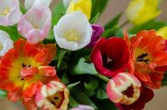 Wielkanocny Tulipanowy bukiet Obraz Stock