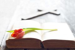 Wielkanocny wiosna tulipan, biblia z przecinającym abstrakcjonistycznym tłem i obraz stock