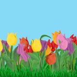 Wielkanocny wiosny kartka z pozdrowieniami szablon z tulipanami i trawy granicą odizolowywającą na błękitnym tle ilustracji
