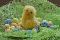 Wielkanocny wizerunek Kurczak z barwionymi jajkami na zielonej trawie Fotografia Royalty Free