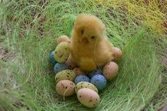 Wielkanocny wizerunek Kurczak z barwionymi jajkami na zielonej trawie Zdjęcia Royalty Free