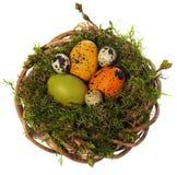 Wielkanocnych jajek ręka malująca w łozinowym wianku, ptasi ` s gniazdeczko mech Obrazy Royalty Free