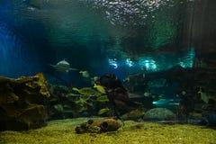 Wielki akwarium z morskimi zwierzętami Fotografia Royalty Free