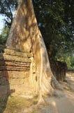 Wielki banyan drzewo, Kambodża Zdjęcia Stock