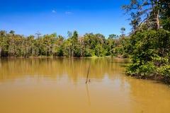 Wielki brown jezioro w tropikalnym tropikalnym lesie deszczowym Zdjęcie Stock