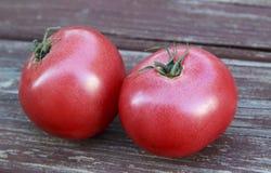 Wielki Czerwony Dojrzały pomidor Obraz Stock