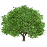 Wielki drzewo Zdjęcie Stock