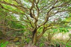 Wielki drzewo zdjęcia royalty free