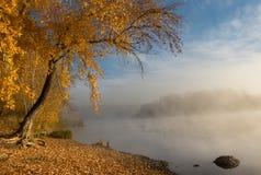 Wielki drzewo, ozdabiający z obfitolistnym ulistnieniem, wiesza nad rzeką n zdjęcie stock