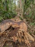 Wielki drzewo w dżungli Obrazy Royalty Free