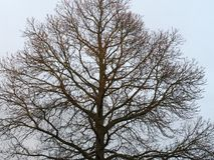 Wielki drzewo z niebieskiego nieba tłem Obrazy Stock