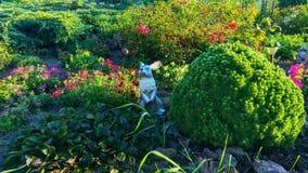 Wielki Flowerbed z królikiem zdjęcia stock