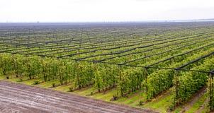 Wielki jabłczanego sadu widok z lotu ptaka Zdjęcia Royalty Free