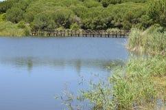Wielki jezioro w polu golfowym Obraz Stock