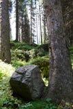 Wielki kamień w drzewie Fotografia Stock