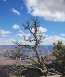 wielki kanion w arizonie Obrazy Stock