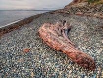 Wielki kawałek drewno na otoczak plaży Zdjęcie Royalty Free