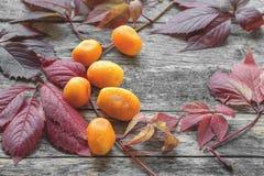 Wielki kolor żółty suszący słodcy kumquats z piękną jesieni czerwienią opuszczają zakończenie Fotografia Stock
