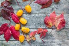 Wielki kolor żółty suszący słodcy kumquats z piękną jesieni czerwienią opuszczają zakończenie Zdjęcia Stock
