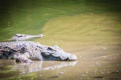 Wielki krokodyla lying on the beach w spokojnej wodzie dla sunbathing Wielki cro Obrazy Royalty Free