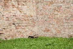 Wielki Mur stare cegły i trawy pole Obrazy Stock