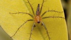 Wielki pająk Zdjęcia Stock