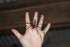 Wielki pająk porównujący ręka Zdjęcie Royalty Free