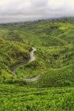 Wielki Pangalengan, Zachodni Jawa zdjęcia royalty free